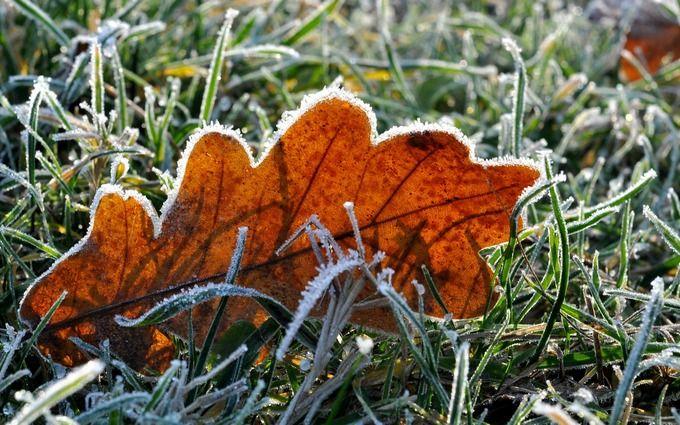 Похолодание и первые заморозки: какую погоду ожидать харьковчанам 23 сентября