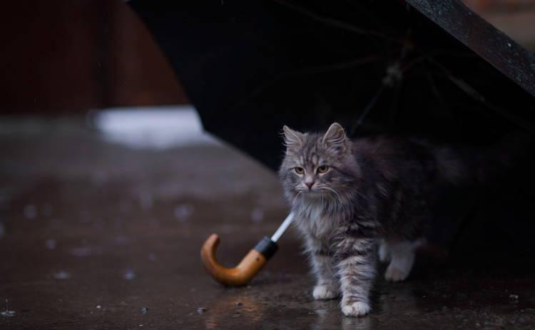 В последние выходные сентября на Харьковщине потеплеет и прольют дожди
