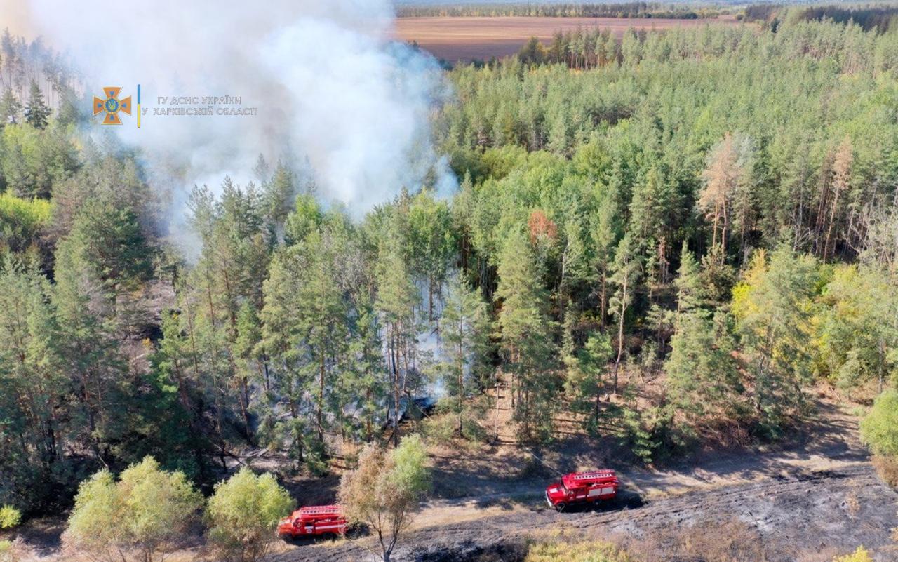 На Харьковщине сутки тушили лесной пожар (фото)