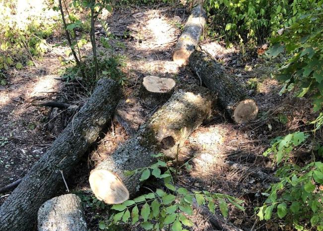 Жители Харьковщины незаконно вырубили лес, им грозит до 5 лет лишения свободы (фото)