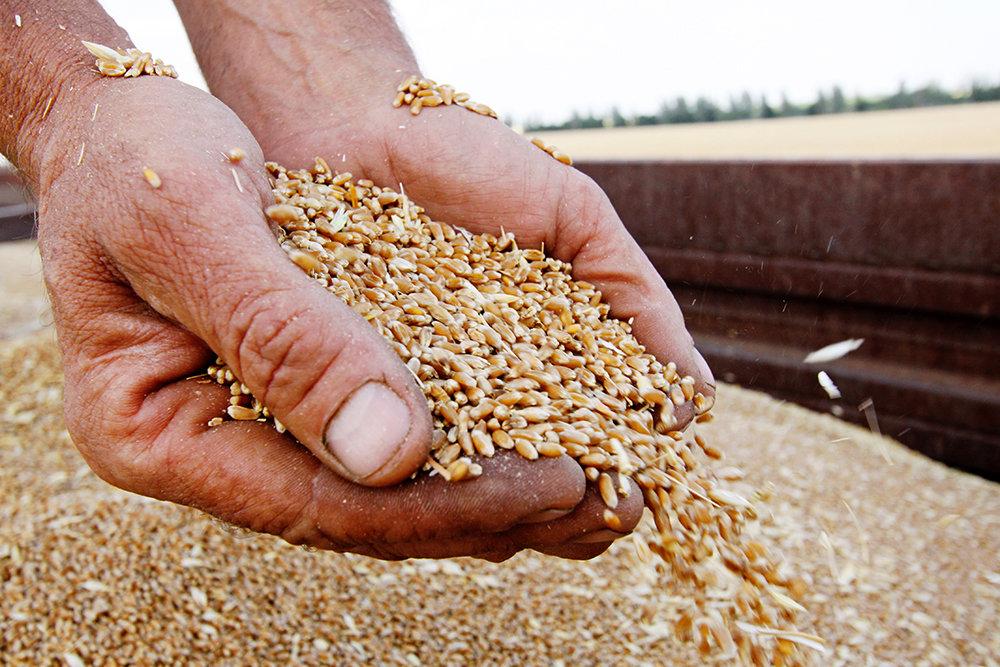В Харьковской области собрали рекордный урожай – облсовет