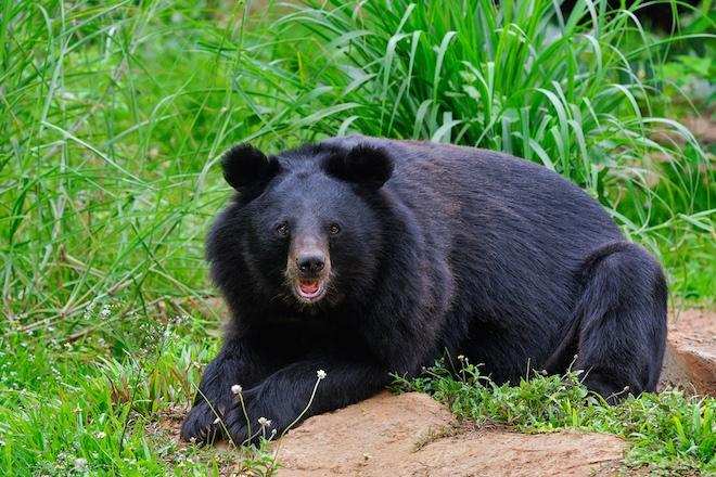 В Японии нашли новый способ предупреждать людей об опасности: медведи и рок-музыка