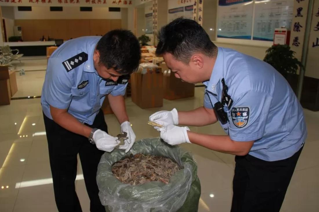 В Китае задержан контрабандный товар: партия морских коньков