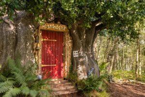 Домик Винни-Пуха в лесу в Великобритании