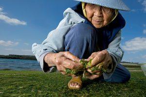 В Японии много долгожителей
