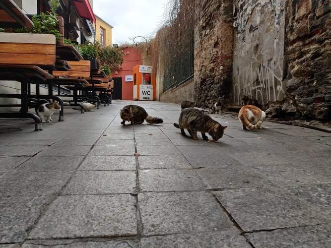 В Чикаго нашли работу котам — им платят зарплату за инстинкты